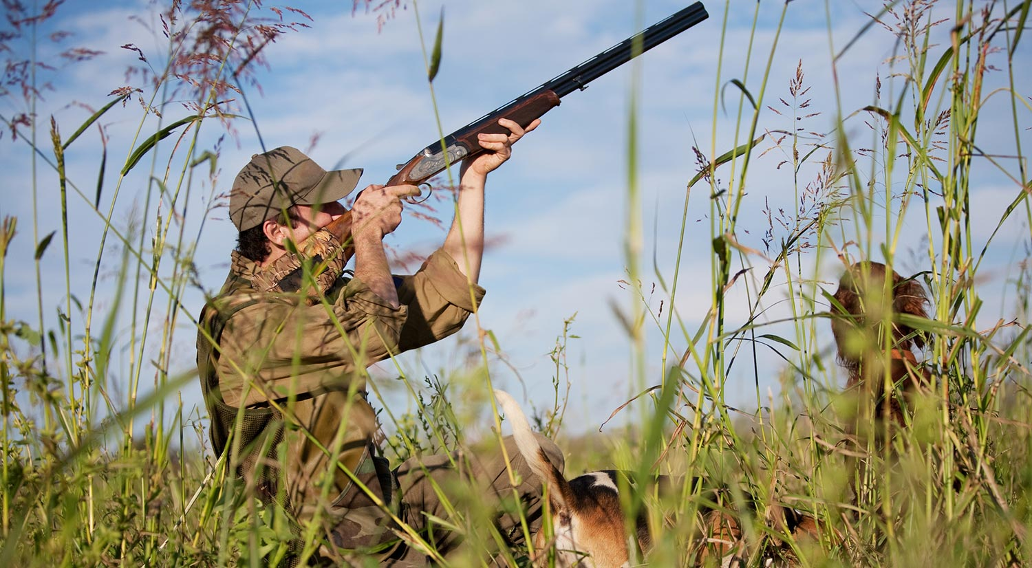 Photo of man and two dogs in grassy area aiming into the sky to hunt
